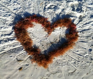 heart of seaweed  morguefile