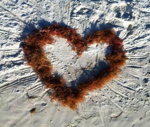 heart of seaweed  morguefile